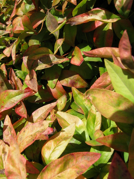 Jumbled leaves have turned many colors.