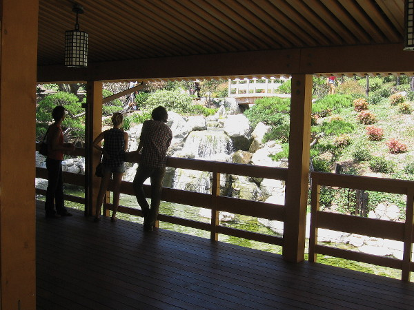 Visitors at the Japanese Friendship Garden stand in the shade of the Inamori Pavilion looking down at a very beautiful waterfall.