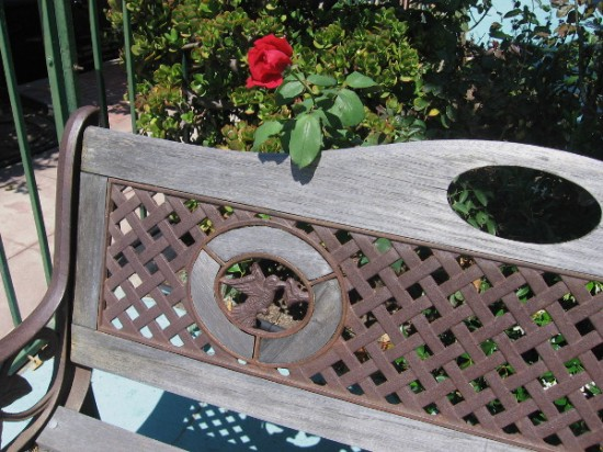 Hummingbird artwork on a bench near a sidewalk, and a rose.