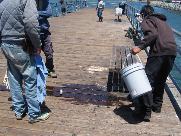 Someone caught a small mackerel, which flops around on the wooden pier.