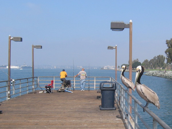 Two brown pelicans perch on a rail hoping for a handout from sympathetic fishermen.