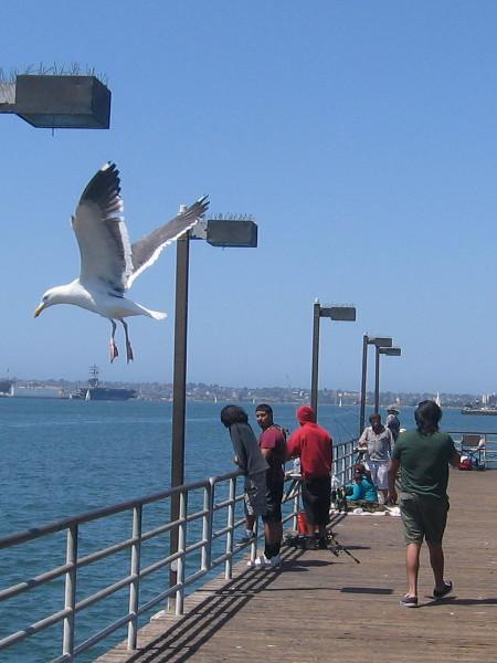 Birds are plentiful on San Diego Bay...