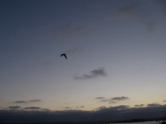 Is that lone bird an albatross flown from Melville's great novel. No, just a gull in the dying light.
