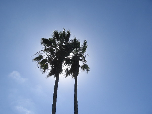 The sun glows behind a pair of palm trees at the edge of Mission Bay.