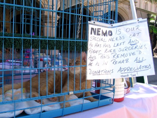 Nemo is our special needs cat. He has had left and right knee surgeries, and pins removed. He is in rehab. All Donations Appreciated! Thank you!