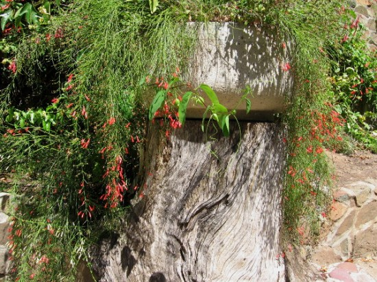 Zoro Butterfly Garden contains rustic, ragged beauty along its stony walkways.