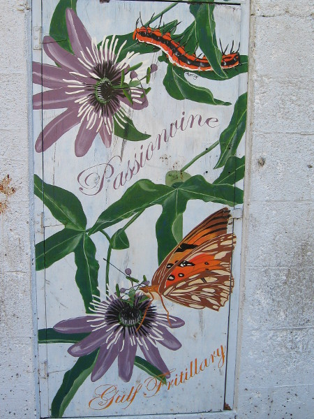 Another section of this informative artwork depicts Passionvine and a Gulf Fritillary.