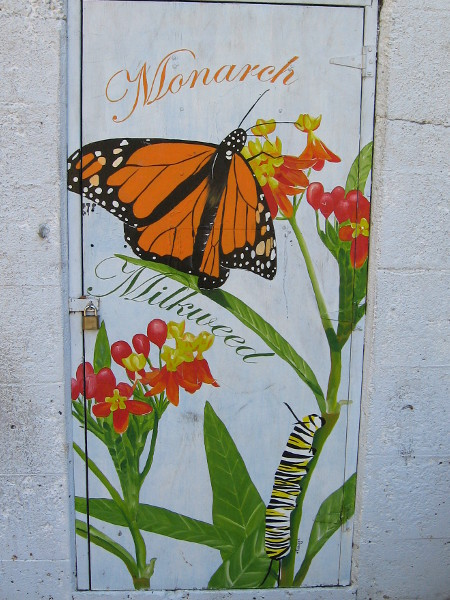 A third section shows that Monarch butterflies are attracted to Milkweed.