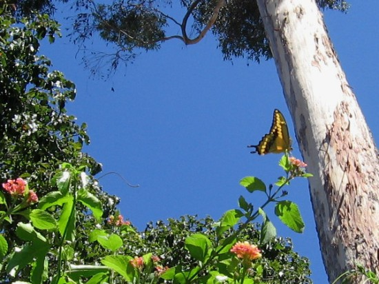 Looking upward from the lush hollow where butterflies thrive, toward blue sky and fluttering, living color.