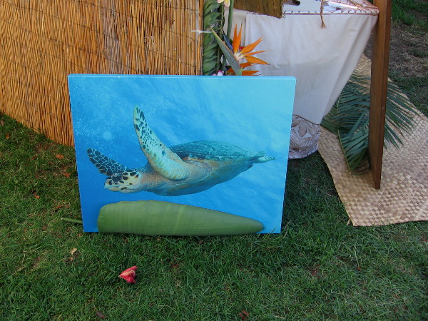 A sea turtle is swimming above the grass!