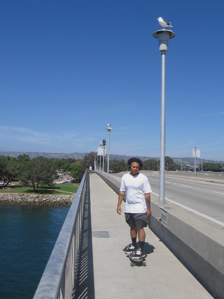 Skateboarding over the Ingraham Street bridge between Vacation Isle and Dana Landing. A seagull on every lamp post!