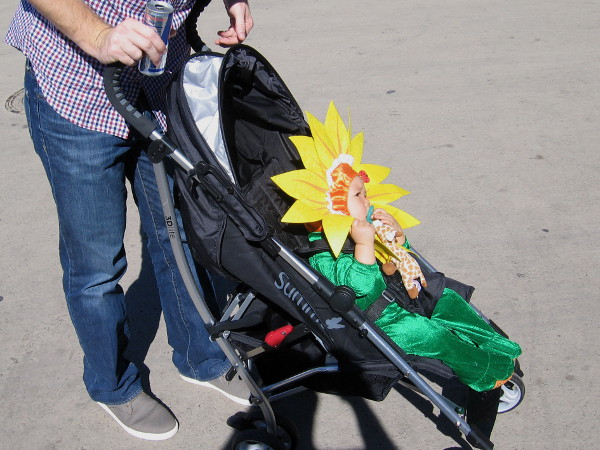 Everything seemed peaceful and normal. A baby stroller headed down El Prado, carrying a sunflower.