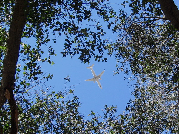 A commercial airplane flies overhead as it crosses Balboa Park heading in toward Lindbergh Field.