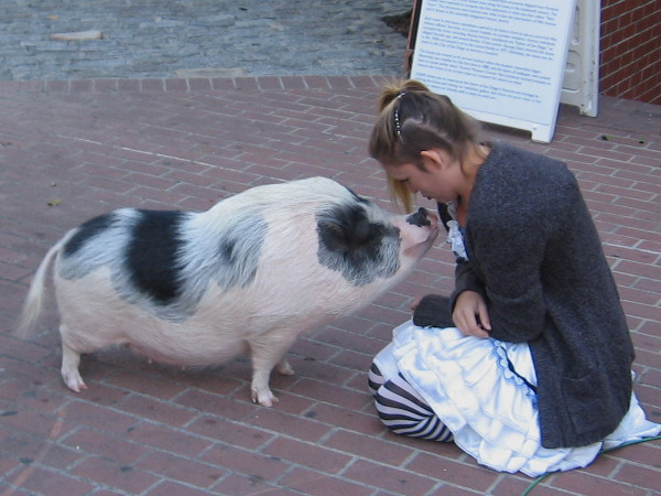 Lady promoting San Diego's upcoming Fall Back Festival goes nose to nose with a friendly hog.