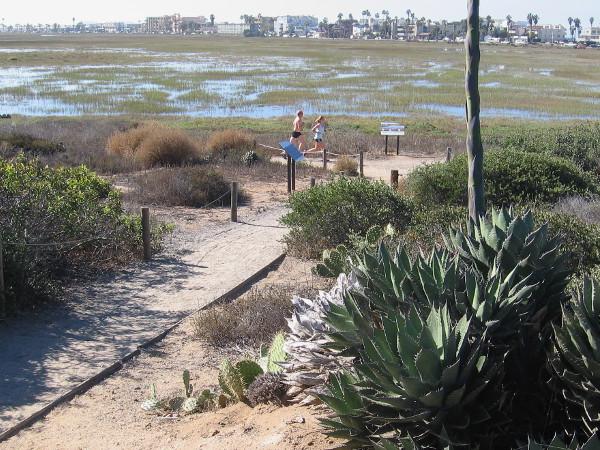 There are many habitats in the estuary including dune, salt panne, salt marsh, mudflat, brackish pond, riparian, coastal sage scrub, and vernal pool.
