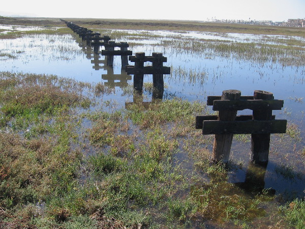 I was told these old wooden pilings used to support a storm drain which ran out to the ocean.