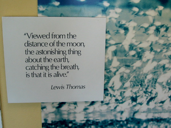 Viewed from the distance of the moon, the astonishing thing about the earth, catching the breath, is that it is alive.