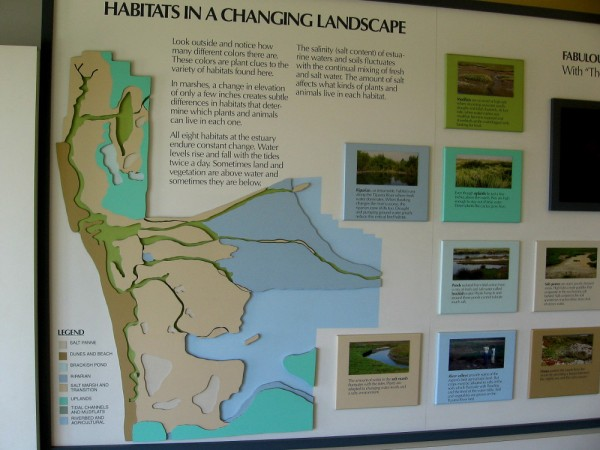Habitats in a changing landscape. All eight habitats in the estuary endure constant change. Water levels rise and fall with the tides. Salinity of the water fluctuates.