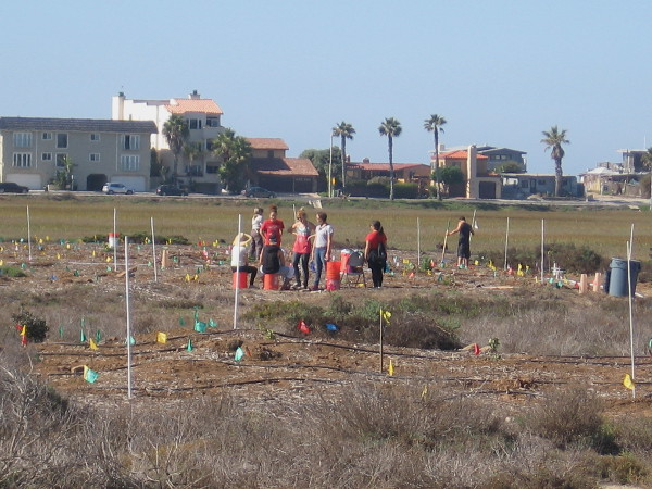 These volunteer students from SDSU are helping to plant native vegetation. Efforts to return the estuary to a natural state are ongoing. This area several decades ago was a dump.