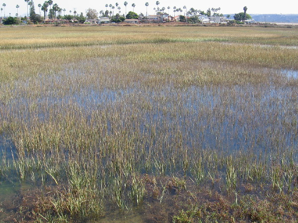 Looking across cordgrass and a beautiful wetland at the extreme southwest corner of the continental United States.