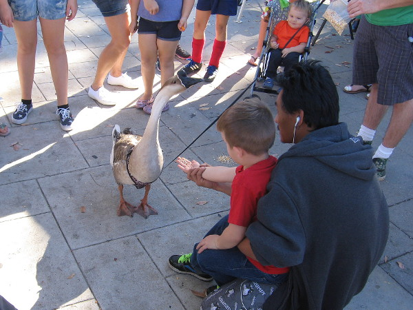 Kids gravitated toward the goose. It gravitated toward some offered food.