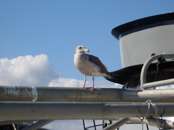 This seagull was watching me taking a walk around Tuna Harbor. I wonder what she thought I was up to.