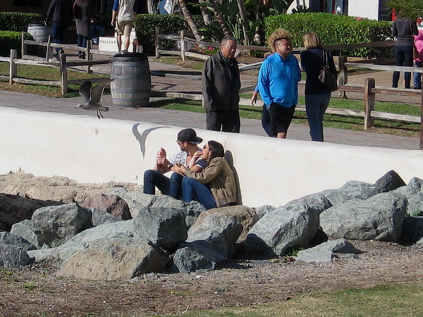 A couple snuggled on the rocks by Seaport Village watch a gull take flight from the nearby wall.