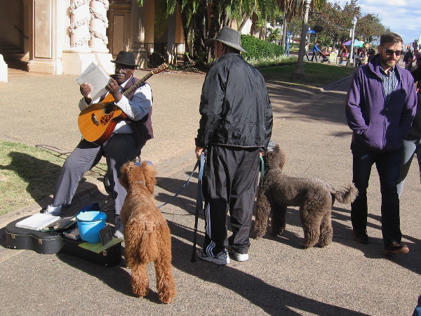 Happy dogs, walkers and a cool guitar-playing musician on a sunny Sunday in San Diego.