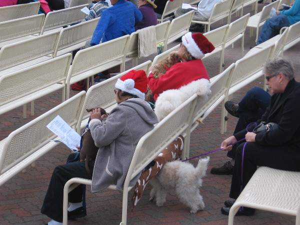 Lots of people had Santa hats and festive holiday clothing. Some dogs did, too.