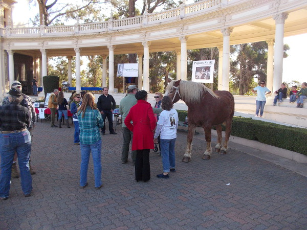 A special fundraiser for Pegasus Rising was held on New Year's Day at the Spreckels Organ Pavilion during the afternoon concert. Jay the friendly horse was present.