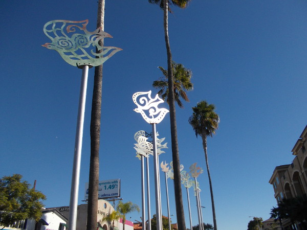 Shiny, silvery birds take to the air, among palm trees in Mission Hills.