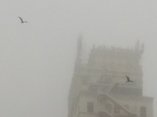 Many seagulls were enjoying the fog, and were circling over the city streets everywhere I walked.