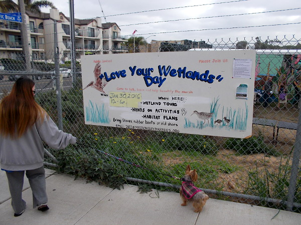 Love Your Wetlands Day took place in Pacific Beach at north Mission Bay's small Kendall-Frost Marsh.