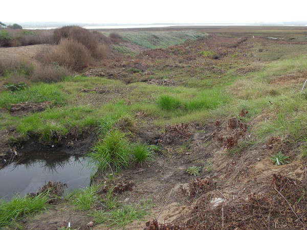 The Kendall-Frost Marsh is being restored into a healthy wetland by the San Diego Audubon Society and the UC Natural Reserve System with the help of volunteers.