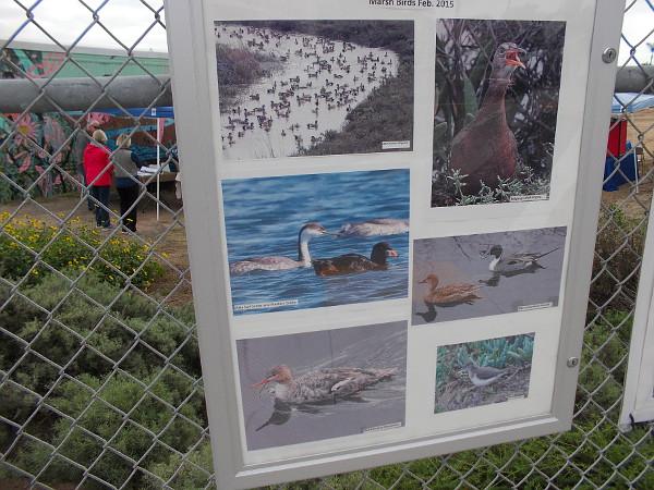 Photos of bird sightings on the surrounding fence.