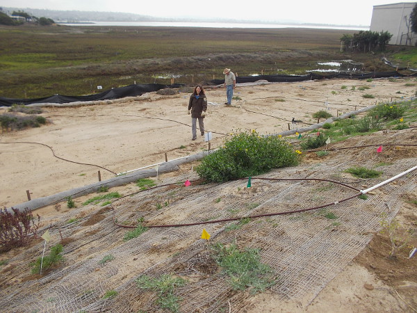 A nearby area where native vegetation is being carefully restored.