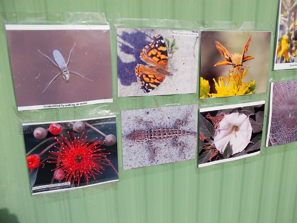 Many photos around the exterior of the trailer show insects, flowers, birds and other wildlife that make the marsh their home.