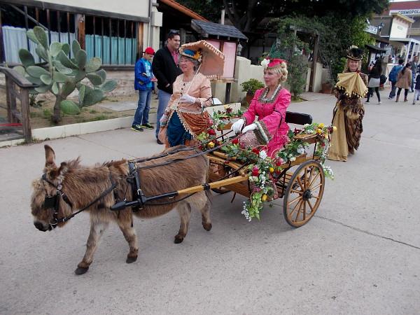 A miniature donkey pulls an elegant cart!