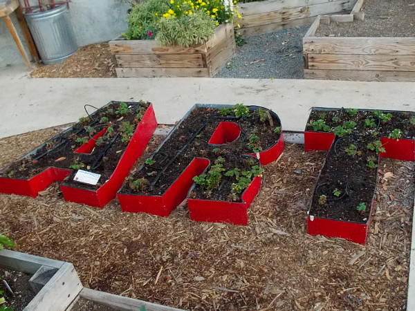 Art is filled with growing strawberry plants at The Garden Project!