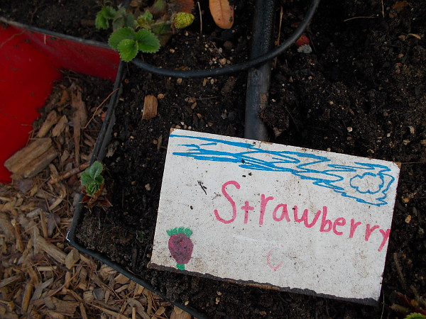 Kids created this fun strawberry art.