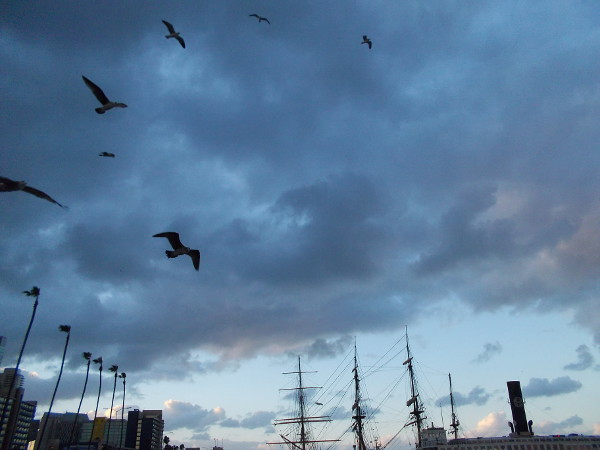 The seagulls were enjoying the stiff chilly morning breeze, but the worst of the gusts seem to be over by sunrise.