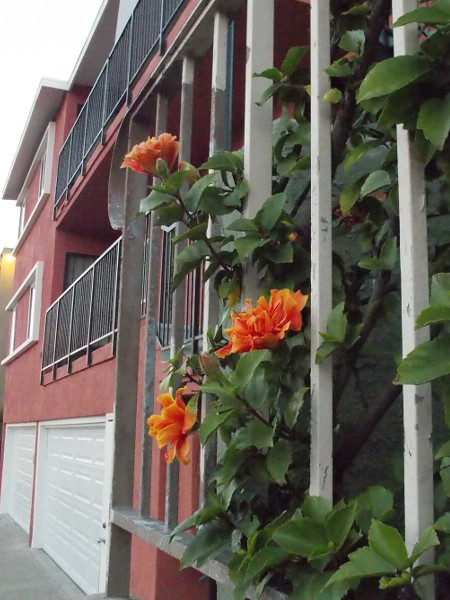 Happy orange flowers poke through some bars along the sidewalk.