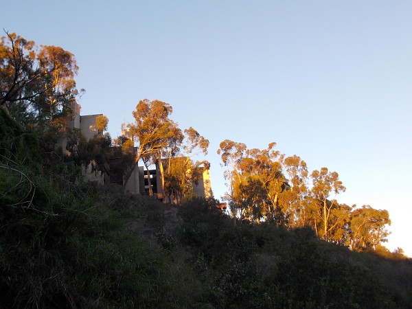 Eucalyptus trees in warm winter morning light. Photo taken while walking down Bachman Place into Mission Valley.