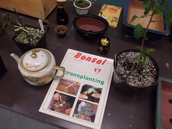 Some bonsai plants and other related items were on display during the club meeting, as well.