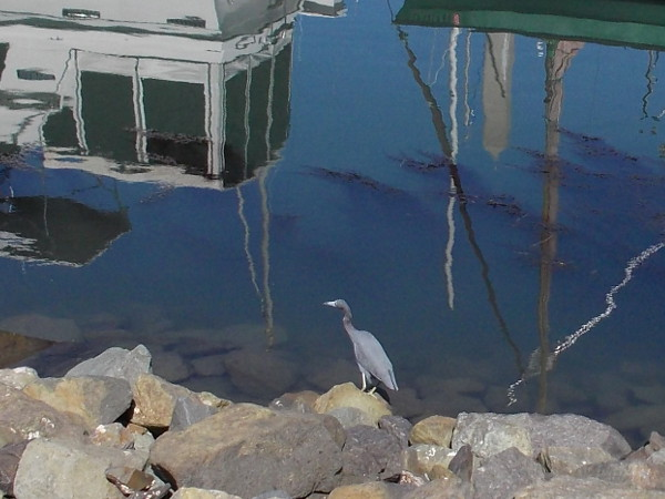 A heron on rocks, and reflections of boats at Dana Landing.