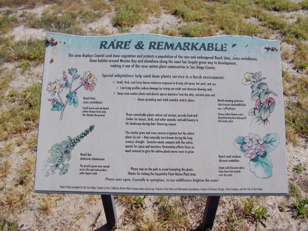Rare and Remarkable. This area displays Coastal sand dune vegetation. The native Beach lotus is endangered.