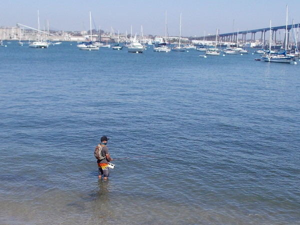 A guy wading in San Diego Bay tries his hand at some fly fishing. Moored boats (where some people live) and the San Diego–Coronado Bridge are visible.
