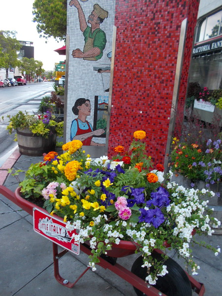 A wheelbarrow full of colorful flowers on a spring morning, following a light rain. Photo taken near base of the Little Italy landmark sign on India Street.