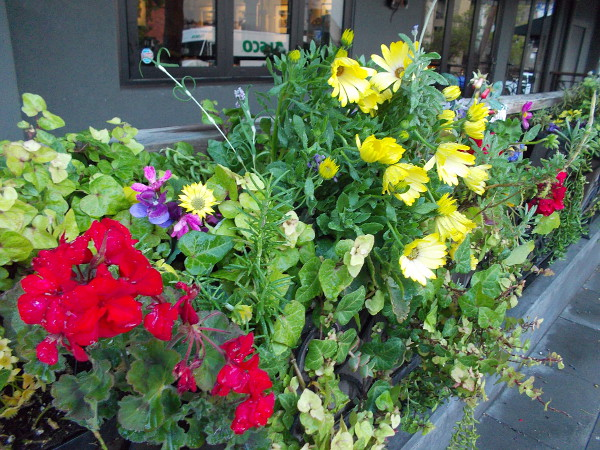 Many spring flowers provide a burst of color near the windows of a Little Italy restaurant.