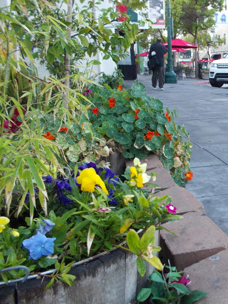 A small patch of color on India Street. A nearby sign reads Garden by Randall.